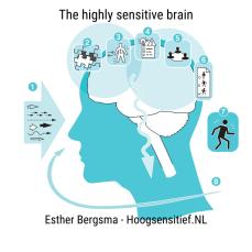 HSP Brain Hoogsensitief.NL